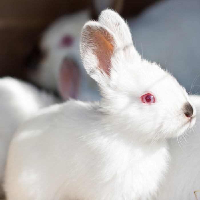 help stop cruelty to rabbits. Black Bedroom Furniture Sets. Home Design Ideas